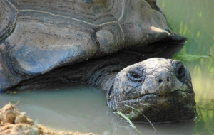 Aldabra Giant Tortoise Wallpapers HD