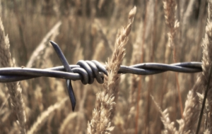 Barb Wire Images