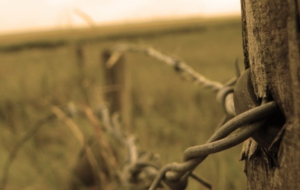 Barb Wire Photos