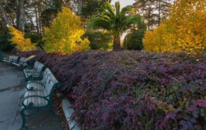 Golden Gate Park Full HD