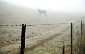 Pictures Of Barb Wire