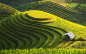 Pictures Of Rice Terrace