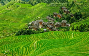 Rice Terrace Background
