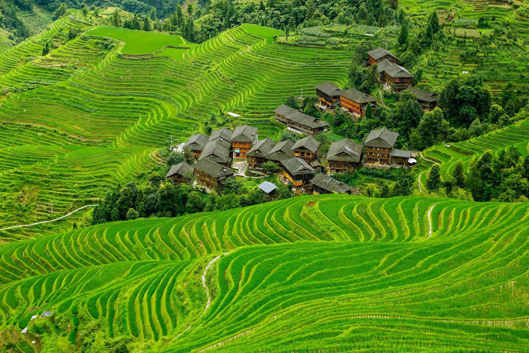 rice terrace wallpapers backgrounds