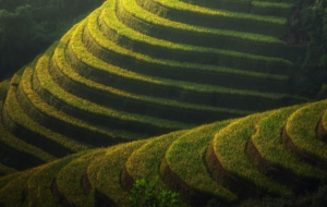 Rice Terrace Computer Backgrounds