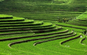 Rice Terrace Desktop