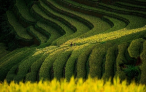 Rice Terrace HD Desktop
