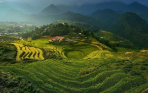 Rice Terrace HD Wallpaper