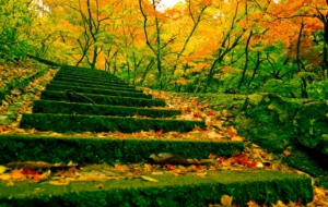 Stairs High Quality Wallpapers