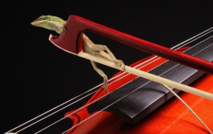 Violin Photos
