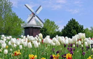 Windmill Full HD