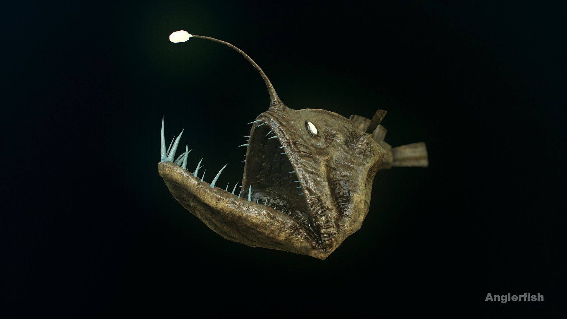 Anglerfish wallpapers backgrounds for Angler fish size