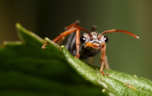 Ant Download