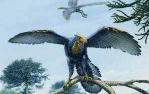 Archaeopteryx Computer Wallpaper