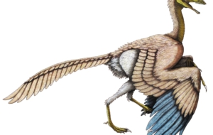 Archaeopteryx High Definition Wallpapers
