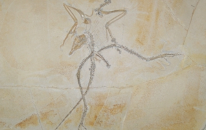 Archaeopteryx Pictures