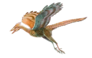 Archaeopteryx Wallpapers HD
