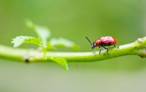 Beetle High Definition Wallpapers