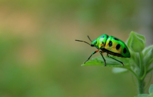 Beetle Full HD