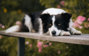 Best Images Of Border Collie