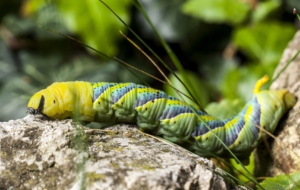 Best Images Of Caterpillar