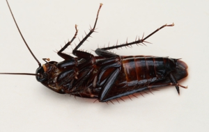 Best Images Of Cockroach