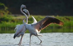 Best Images Of Flamingo