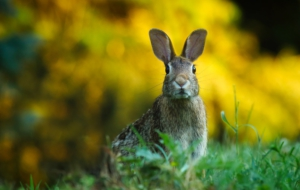 Best Images Of Hare