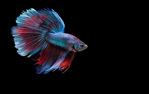 Betta Photos