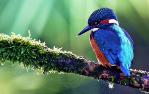 Bird Of Paradise High Definition Wallpapers