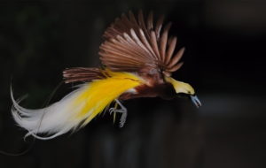 Bird Of Paradise Photos