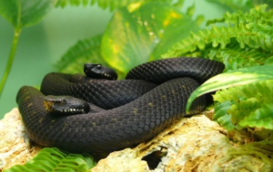 Black Mamba Pictures