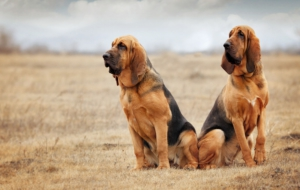 Bloodhound For Desktop