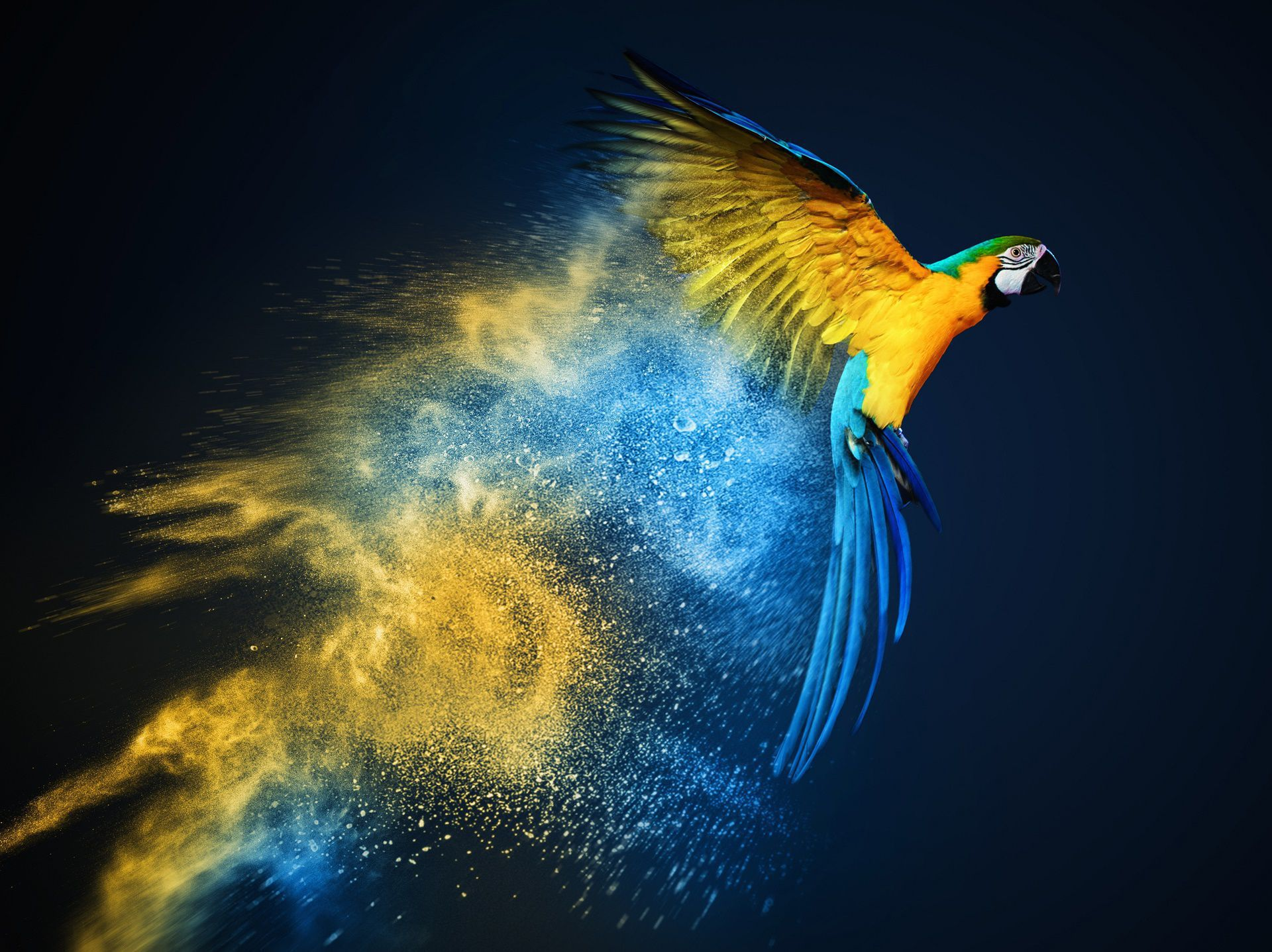 blue and yellow macaw wallpapers backgrounds. Black Bedroom Furniture Sets. Home Design Ideas