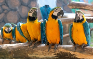 Blue And Yellow Macaw Desktop Wallpaper