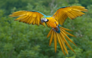 Blue And Yellow Macaw Download