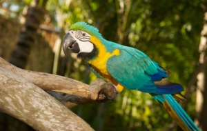 Blue And Yellow Macaw Download Free Backgrounds HD