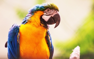 Blue And Yellow Macaw HD Pics