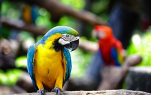 Blue And Yellow Macaw High Definition Wallpapers