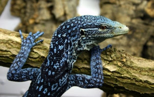 Blue Spotted Tree Monitor HD Desktop