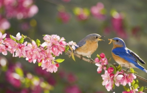 Bluebird Wallpapers HD