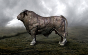 Bull HD Wallpaper