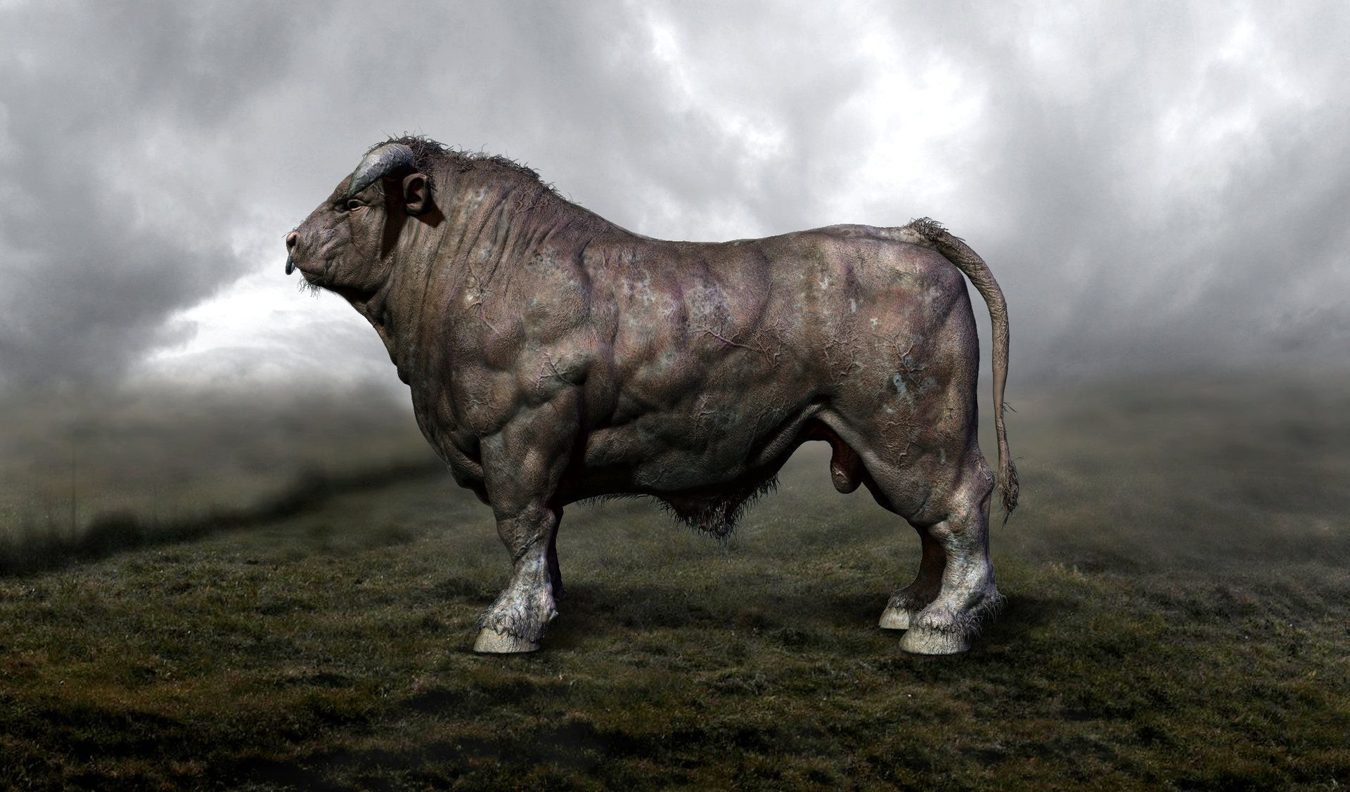 Bull Wallpaper Wallpaper Ideas