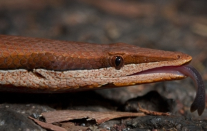 Burton's Legless Lizard HD Wallpaper