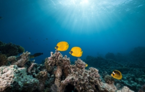 Butterflyfish Images