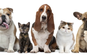 Cat & Dog Computer Backgrounds