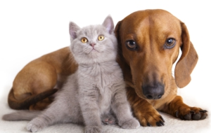 Cat & Dog Desktop Images