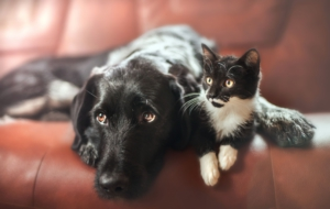 Cat & Dog Download Free Backgrounds HD