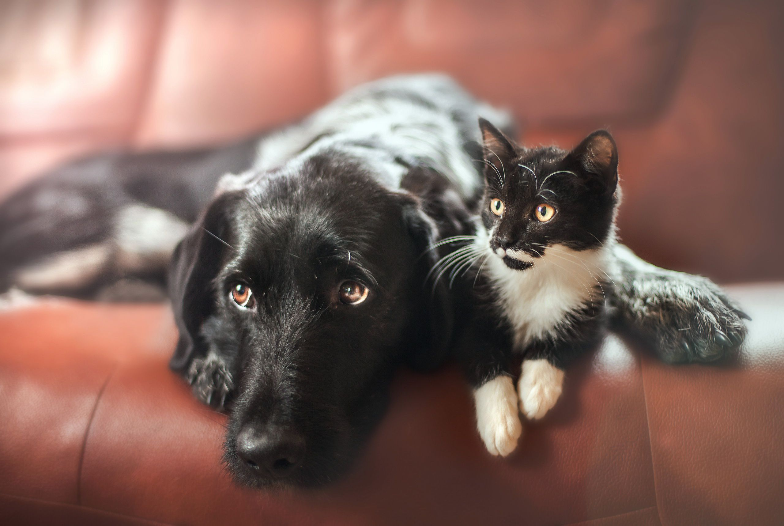 Cat & Dog Wallpapers Backgrounds