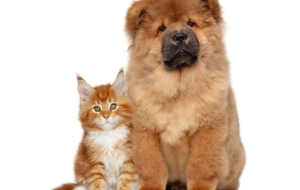 Cat & Dog Free HD Wallpapers